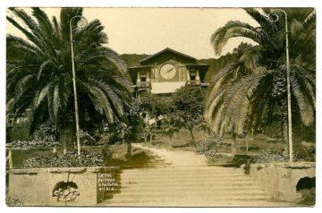 Гагры. Ресторан и пальмы.
